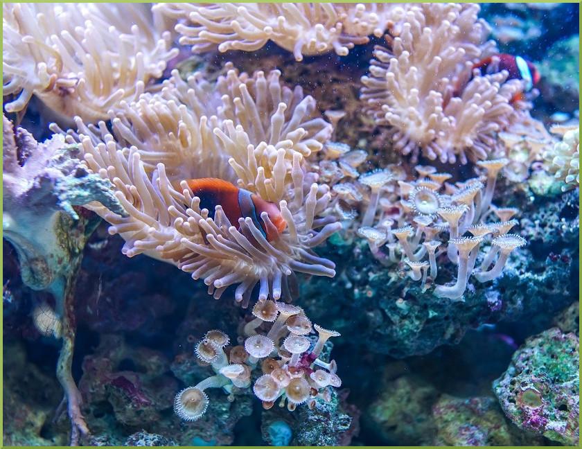 Nelle barriere coralline il futuro del pianeta