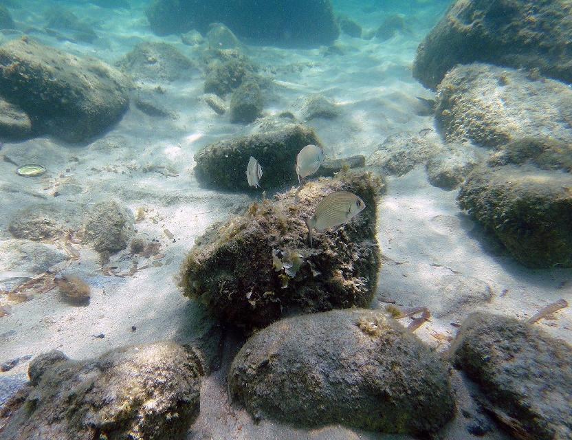 Antropocene: alla scoperta delle rocce 2.0