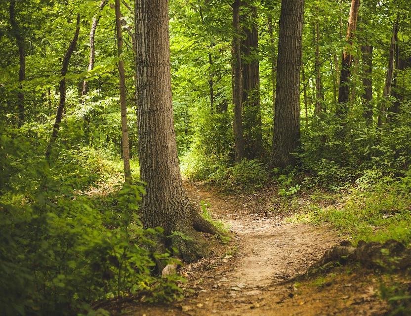 I boschi ci raccontano il cambiamento climatico
