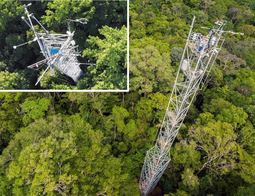 Il respiro della foresta: quando la fisica incontra l'ecologia.