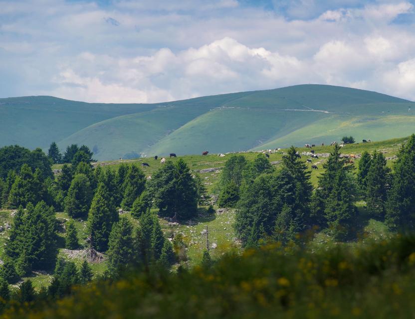 Insetti, cambiamento climatico e conservazione nei Monti Lessini: indizi