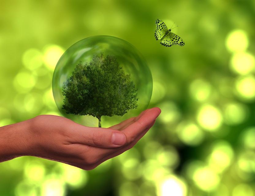 """Saperi in transizione. Strumenti e pratiche per una cittadinanza ecologica e globale"""""""