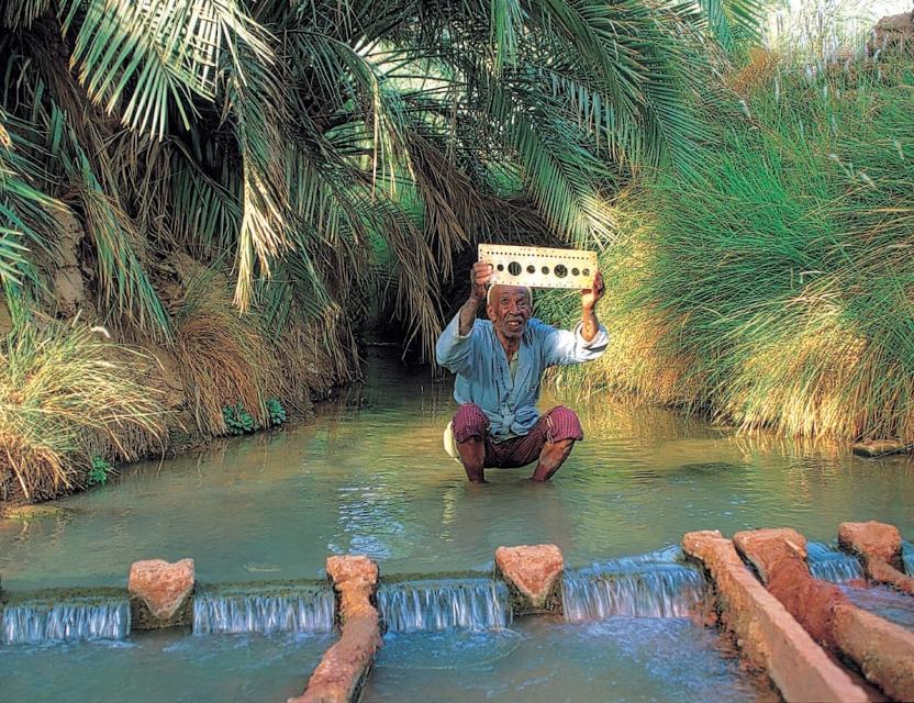 Impariamo dalle oasi